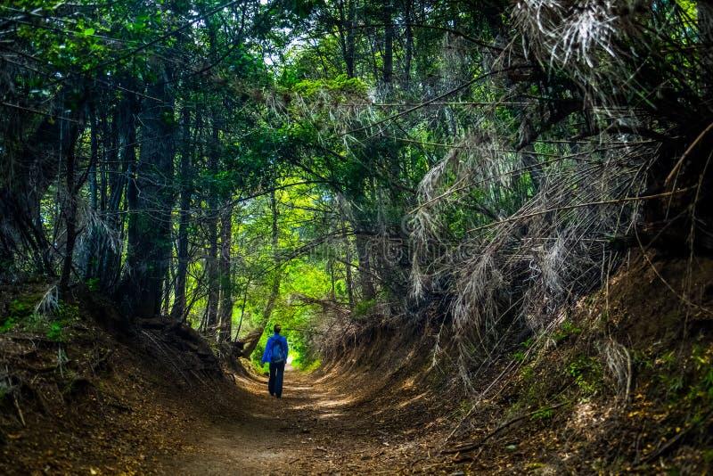 Wanderer geht auf den Weg lizenzfreies stockbild