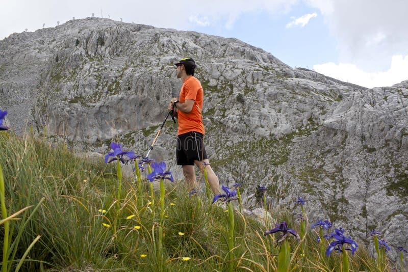 Wanderer im Hoch der Berge umgeben von den Blumen stockbild