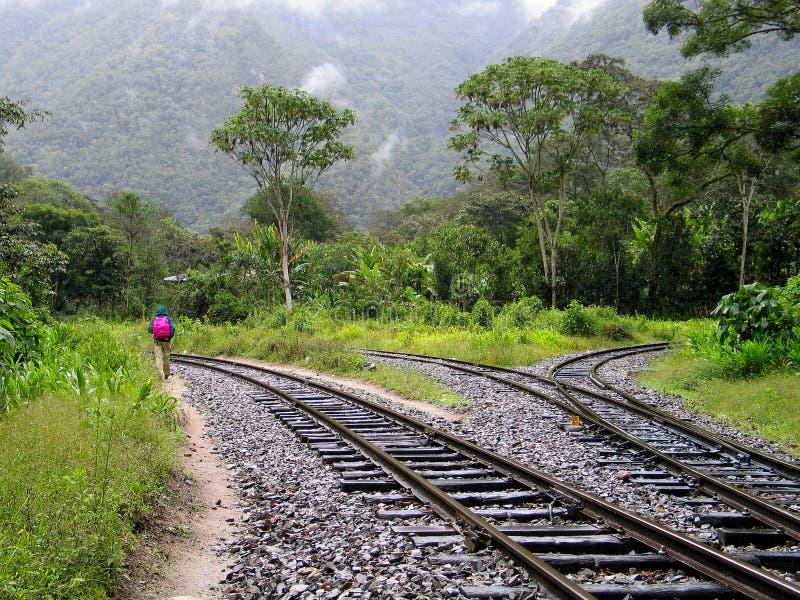 Wanderer im Regen-Wald stockbilder