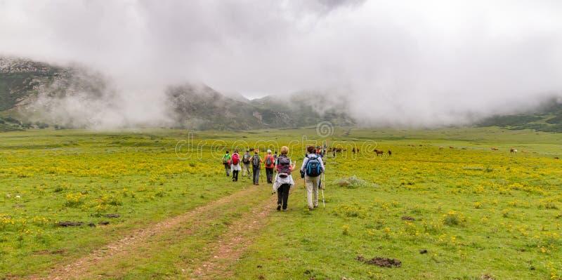 Wanderer in nebligen Bergen und grünen Weiden stockfotografie