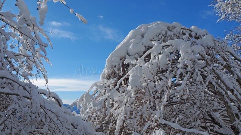 Download Wanderergesichtspunkt Nahaufnahmebeine Mit Den Schneeschuhen, Die Auf Schnee Gehen, Tauchen Auf Snowshoeing Auf Frischem Schnee Stockfoto - Bild von lebensstil, ausrüstung: 106800322
