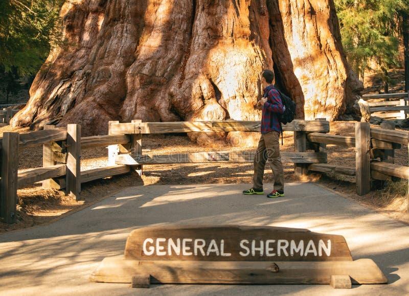 Wanderermann nahe General Sherman Tree - der größte Baum auf Erde Reisendmann, der den Baum des riesigen Mammutbaums betrachtet stockfotos