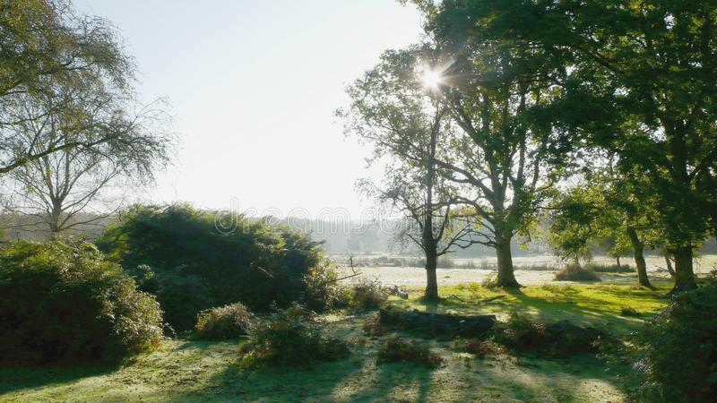 Wandering the New Forest. Early morning in the New Forest in Dorset in England.  Bushes, trees and dew on the grass stock images