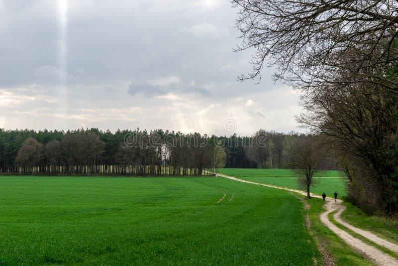 Download Wandern stockfoto. Bild von grün, baum, gras, jahreszeit - 90231696