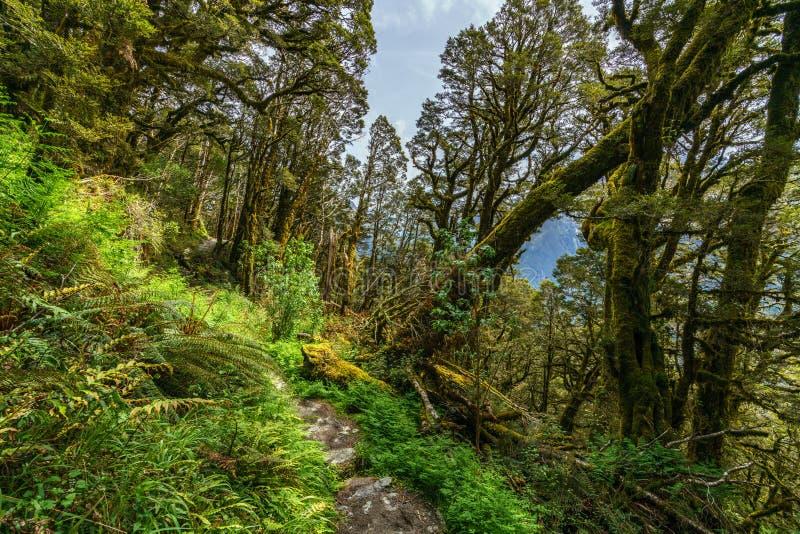 Wandern der routeburn Bahn, Süden, Neuseeland 1 lizenzfreie stockfotografie