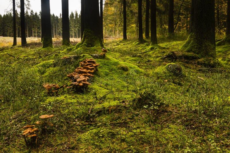 Wandern der Spur GR5 in der Benelux stockbild