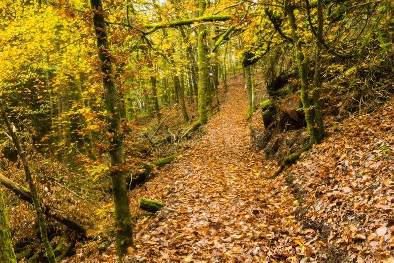 Wandern der Spur GR5 in der Benelux stockbilder