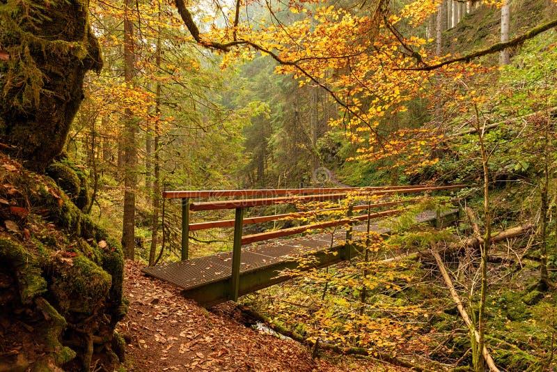 Wandern des Eindruckes im Schwarzwald entlang dem Roetenbach im Herbst, Deutschland Magischer Autumn Forrest Colorful Fall stockfotografie