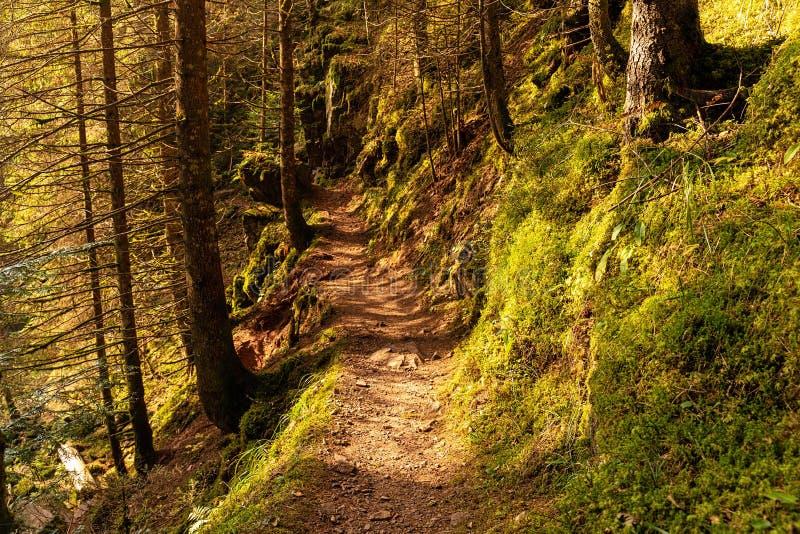Wandern des Eindruckes im Schwarzwald entlang dem Roetenbach im Herbst, Deutschland Magischer Autumn Forrest Colorful Fall stockbilder