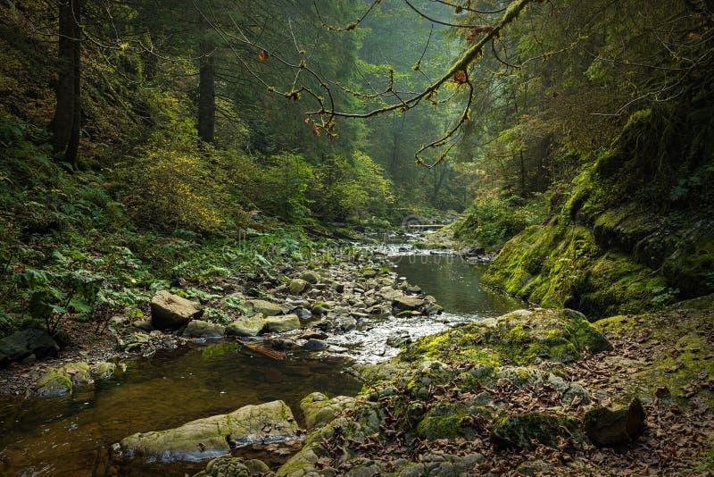 Wandern des Eindruckes im Schwarzwald entlang dem Roetenbach im Herbst, Deutschland Magischer Autumn Forrest Colorful Fall stockfoto