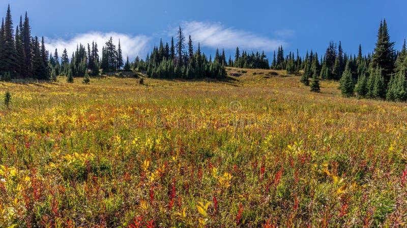 Wandern durch Alpenwiesen zu Tod Mountain stockbild