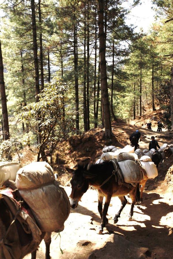 Wandern in Nepal lizenzfreie stockbilder
