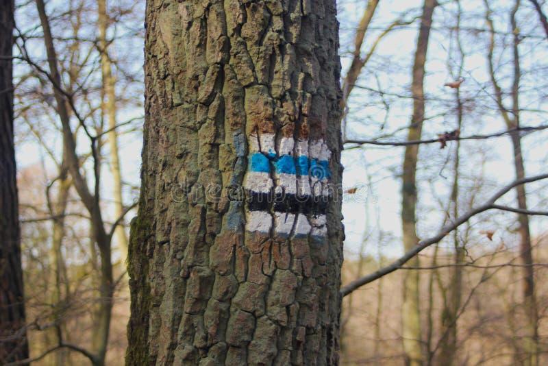Wandernde Spur auf dem Baum stockfotos