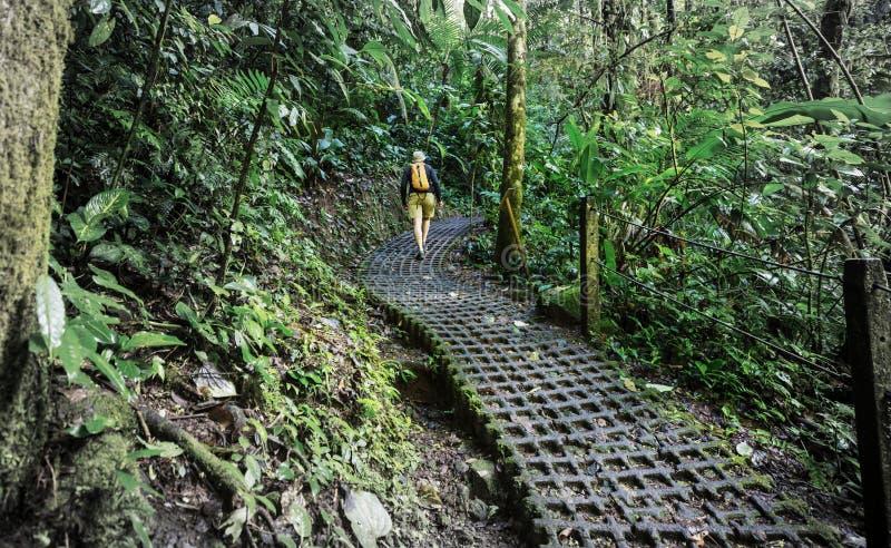 Wanderung in Costa Rica stockbild