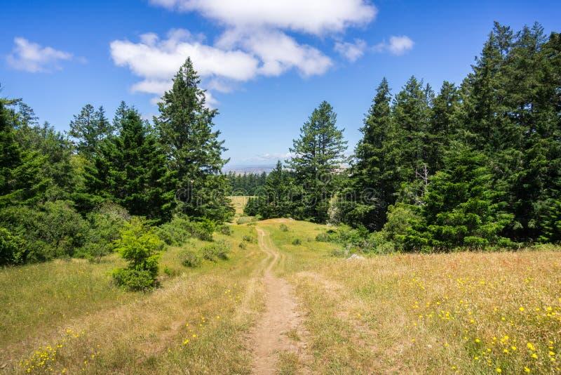 Wanderweg auf den Hügeln von Nord-San Francisco Bay, Kalifornien lizenzfreies stockbild