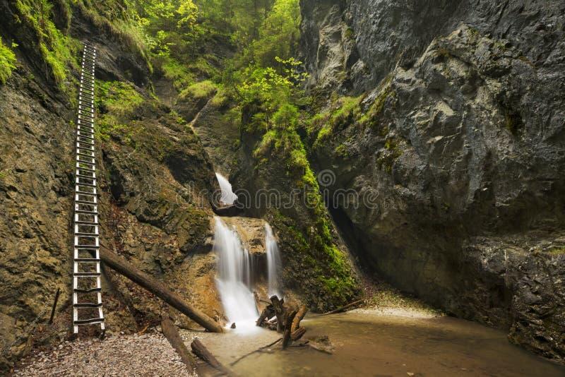 Wanderweg durch eine üppige Schlucht in SlovenskÃ-½ Raj, Slowakei lizenzfreie stockfotos