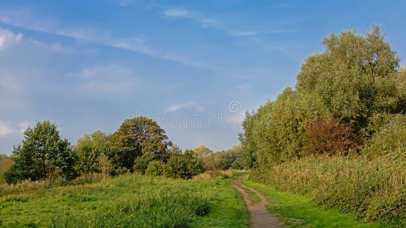Wanderweg durch eine Wiese mit Bäumen und flämischer Landschaft der Sträuche stockfotografie