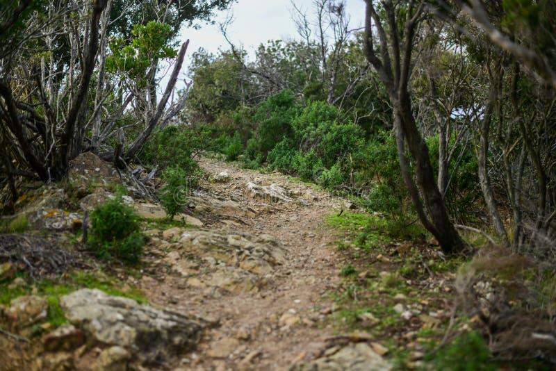 Wanderweg im mediterranen Busch stockfotografie