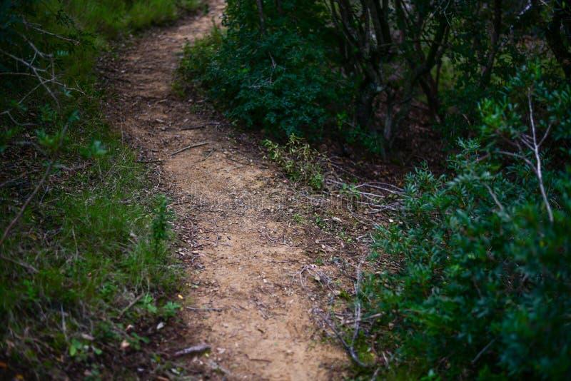 Wanderweg im mediterranen Busch stockfotos