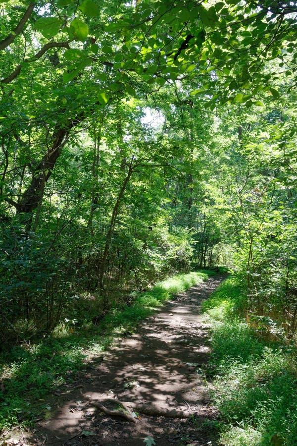 Wanderweg im Shenandoah-Nationalpark, Virginia lizenzfreies stockfoto