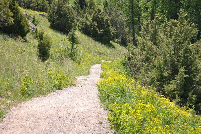 Wanderweg-Montana-Frühling lizenzfreie stockbilder