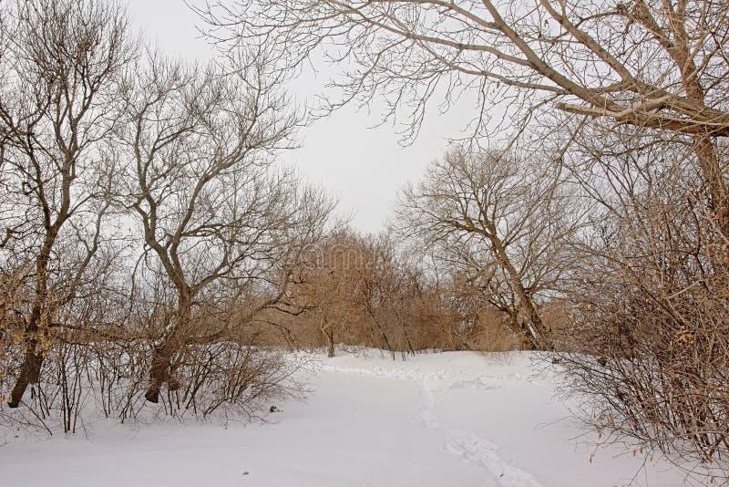 Wanderweg torugh der Schnee zwischen bloßen Bäumen und Sträuchen lizenzfreies stockfoto