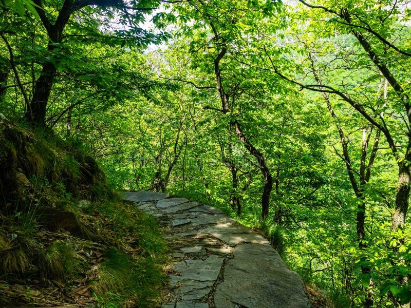 Wanderweg von Cicogna zu Pogallo in Val Grande National Park stockfoto
