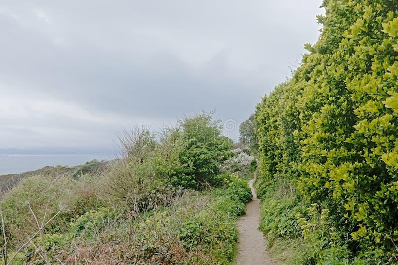 Wanderweg zwischen üppigen grünen Sträuchen entlang den Klippen von howth, Irland lizenzfreie stockfotografie