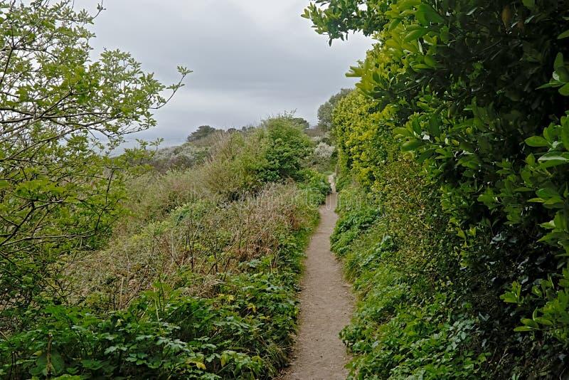 Wanderweg zwischen frischen grünen Frühlingsbäumen und Sträuchen in Howth stockbild