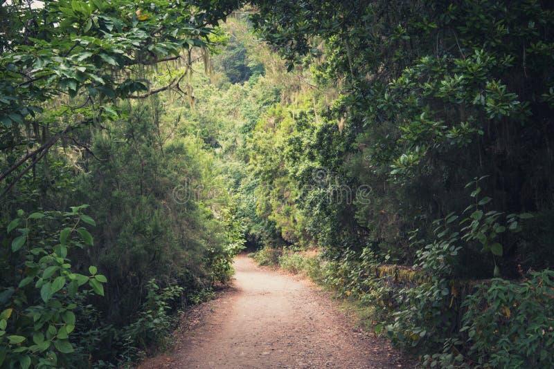 Wanderwegabflussrinnen-Waldlandschaft - Gehweg in der Wildnis stockfotos