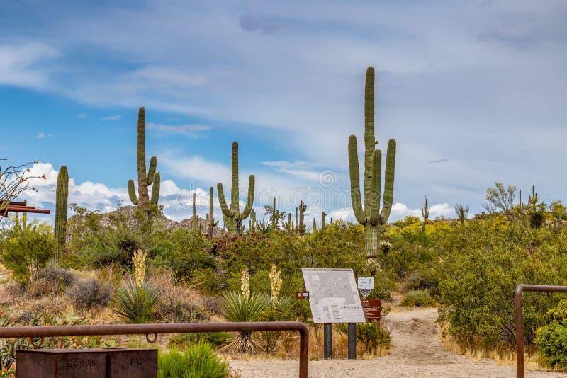 Wanderwegkopf an der Braun-Ranch-Wüsten-Konserve stockfotos
