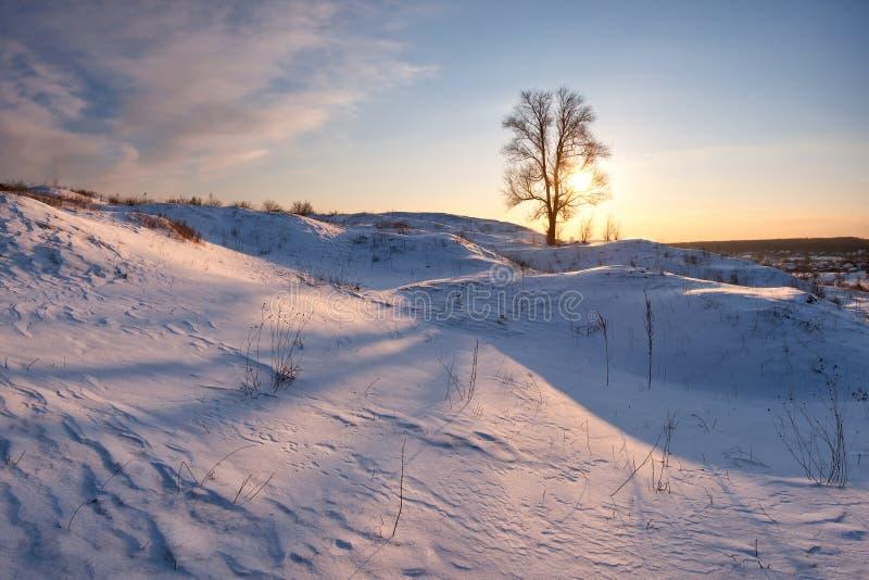 Wandscape met eenzame boom stock afbeeldingen