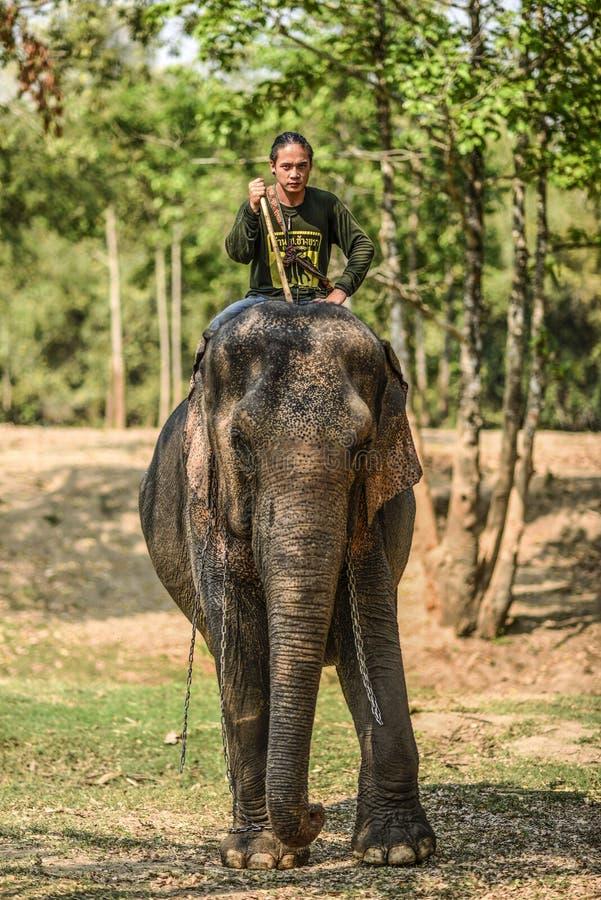 Wang Dong, Tailândia, o 6 de março de 2016: Equitação do Mahout em seu elefante em sanktuary dos elefantes, mundo dos elefantes fotografia de stock