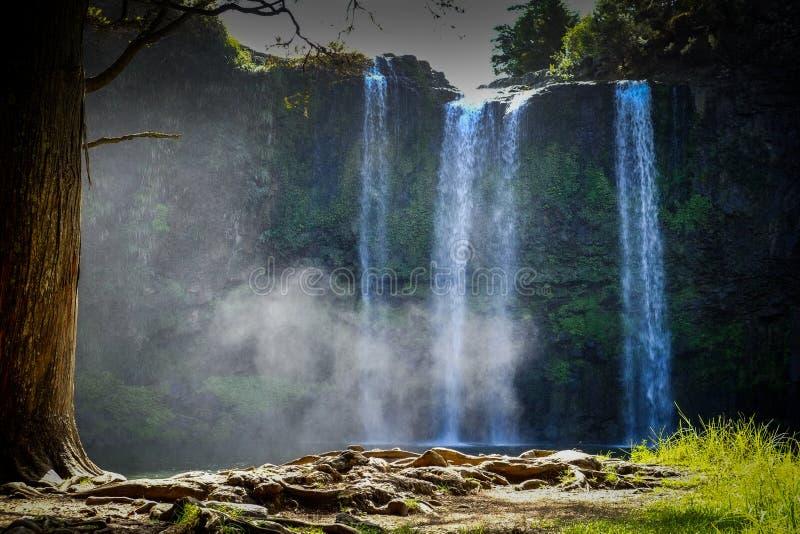 Wangaraiwaterval met vijver de mist drijft in het bos af royalty-vrije stock fotografie