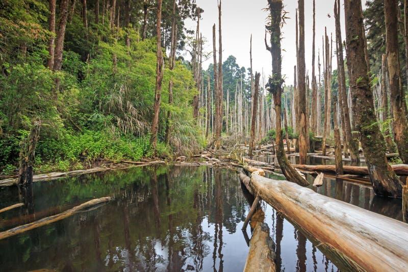Wangyou森林在南投,台湾 免版税库存照片
