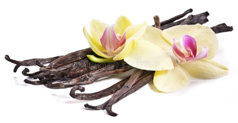 Wanilia kije z kwiatem. obrazy royalty free