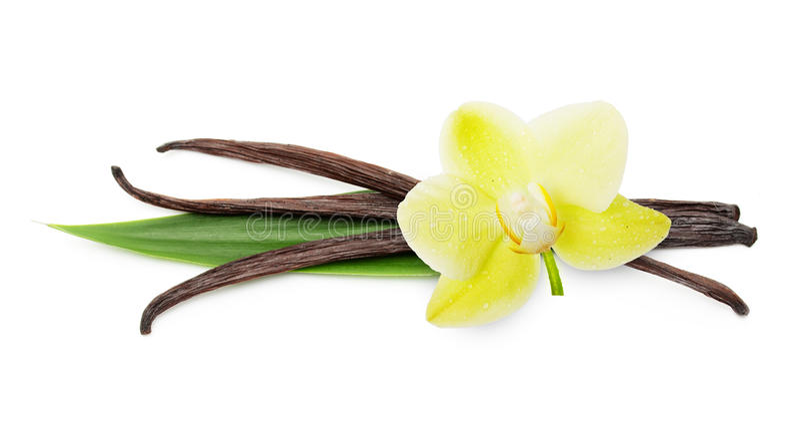 Wanilia kwiat i obrazy stock