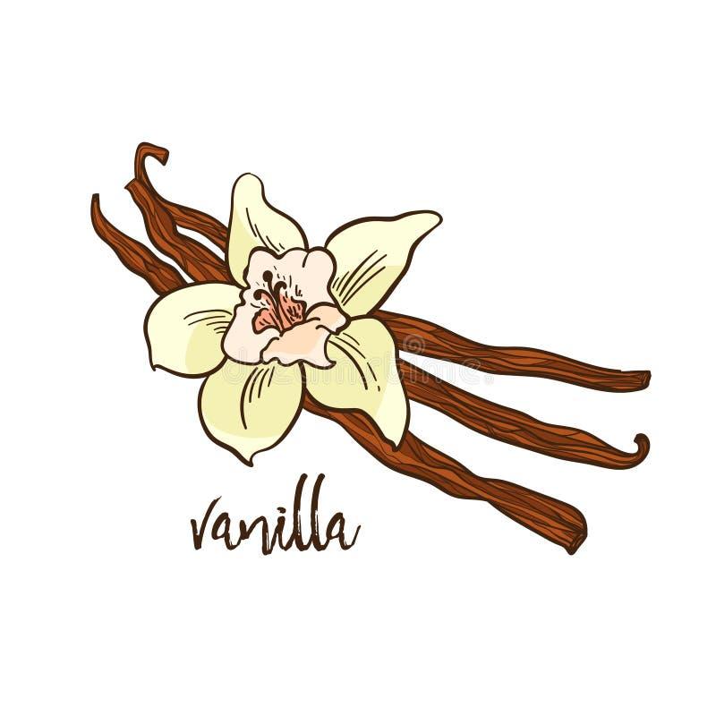 Wanilia - kwiat i korzenny fotografia stock