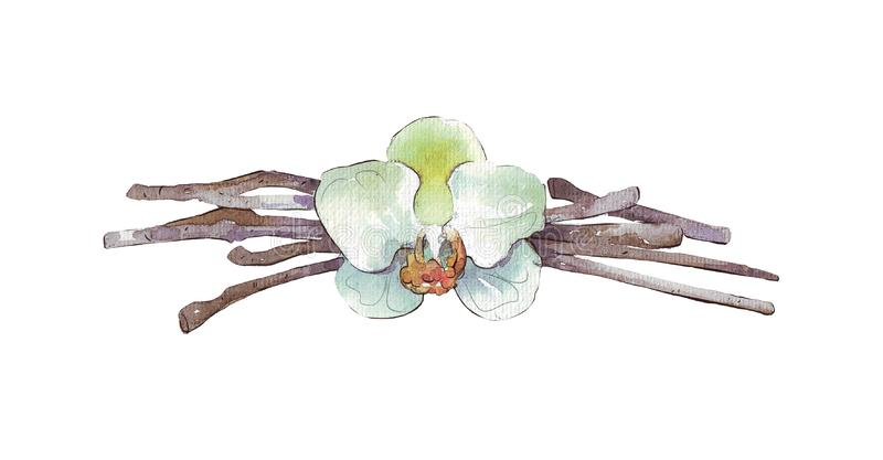 Wanilia kwiat i royalty ilustracja