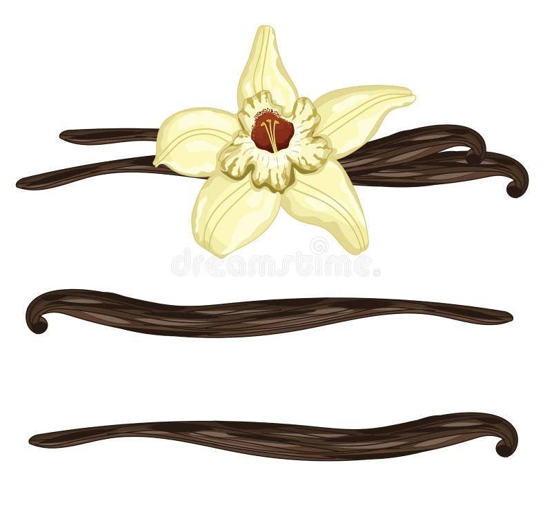 Wanilia wtyka z kwiatem na białym tle ilustracji