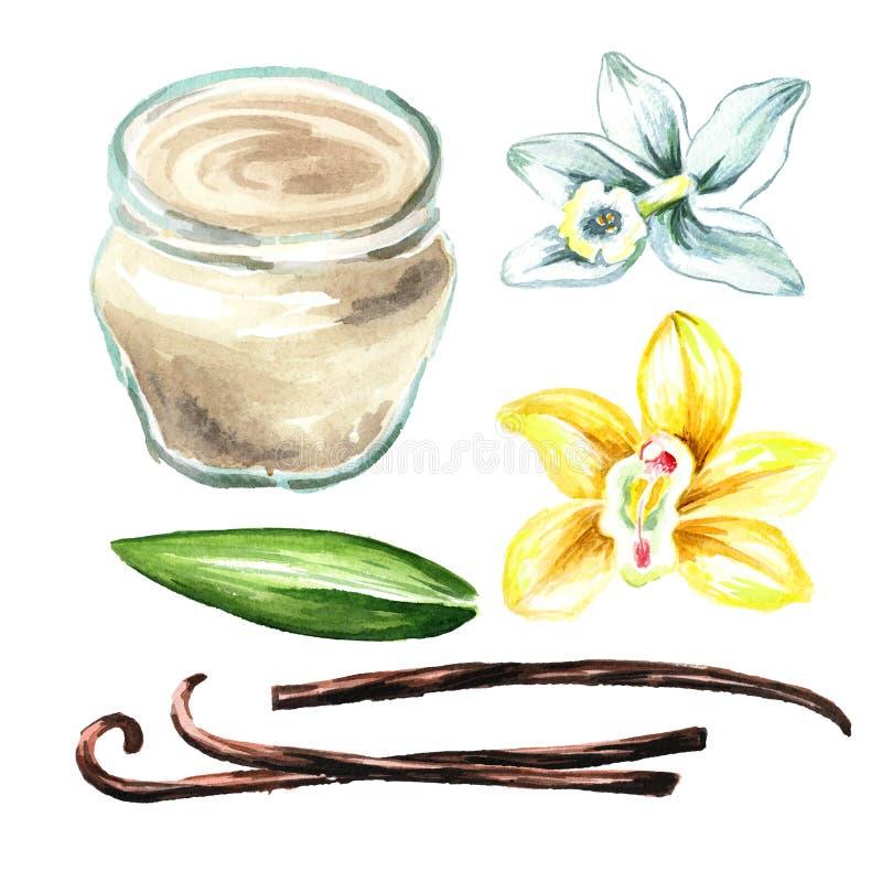 Waniliowa śmietanka z kwiatem, liściem i strąkami ustawiającymi, Akwareli ręka rysująca ilustracja, odizolowywająca na białym tle ilustracji