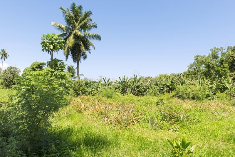 Download Waniliowa Plantacja Na Seychelles Wyspie, Los Angeles Digue Zdjęcie Stock - Obraz złożonej z egzot, krajobraz: 28971906