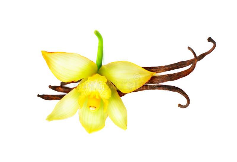 Download Waniliowi strąki i kwiat obraz stock. Obraz złożonej z jedzenie - 57657445