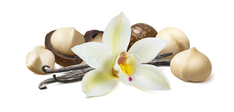 Waniliowy kwiat i strąki z macadamia dokrętkami odizolowywać na białym tle fotografia royalty free