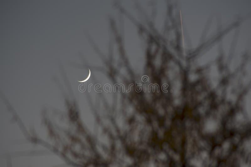 Waning луна среди ветвей дерева стоковые изображения
