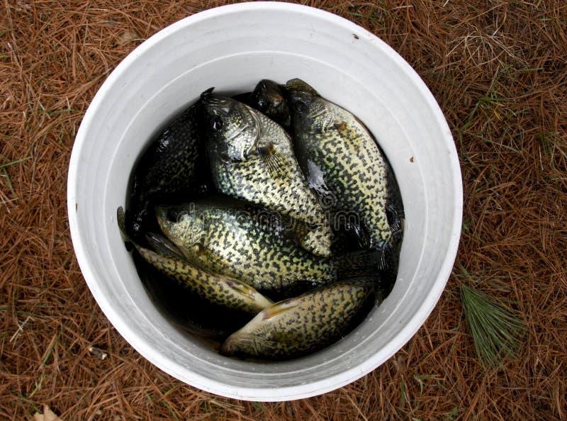 Wanne Fische lizenzfreies stockbild
