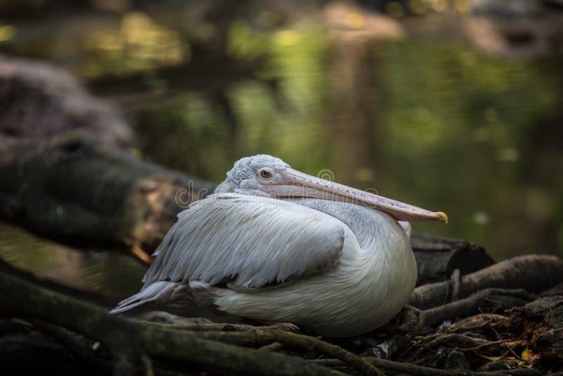 Wanneer we naar Singapore Park reizen, River Safari stock afbeelding