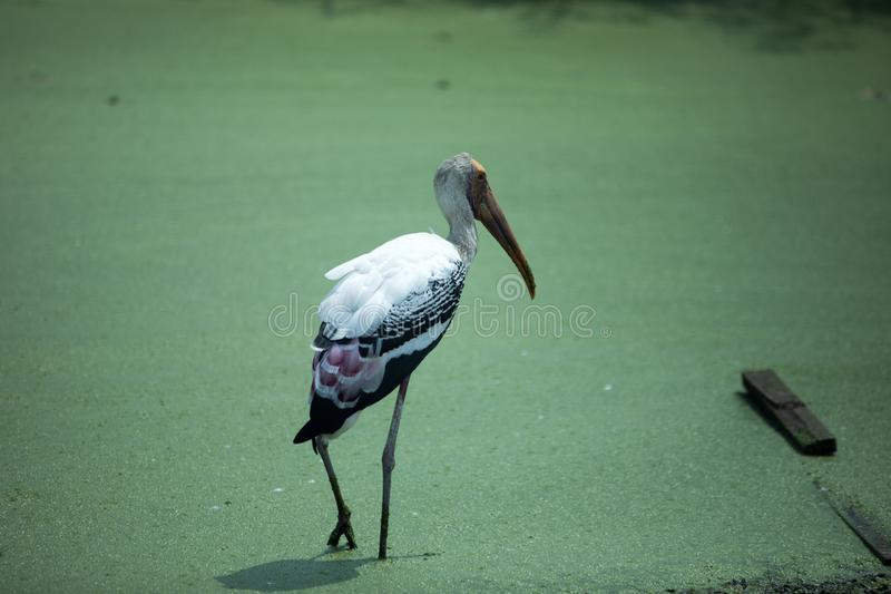 Wanneer we naar Singapore Park reizen, River Safari royalty-vrije stock foto