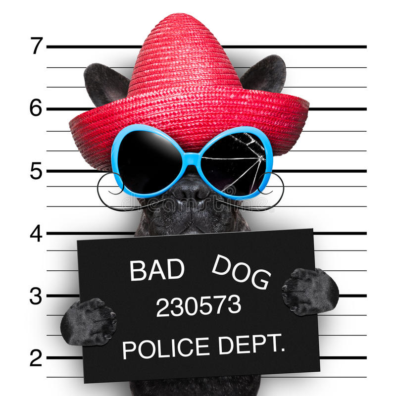 Wanted dog. Mugshot of very bad mexican wanted dog stock images