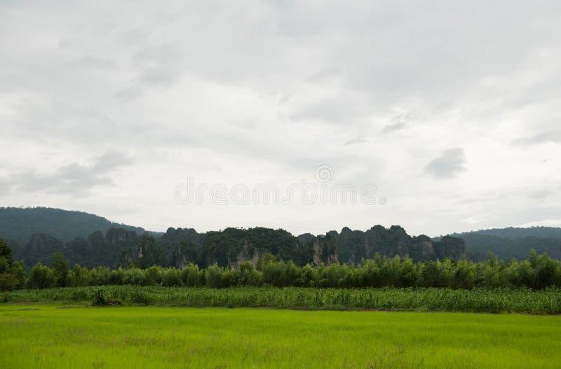 Wapień trzciny cukrowa i wzgórza pola fotografia royalty free